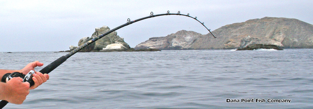 Fishing rod manufacturers dana point fish company for Dana point fishing