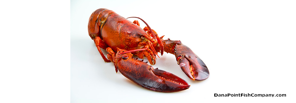 Removing Meat From a Maine Lobster