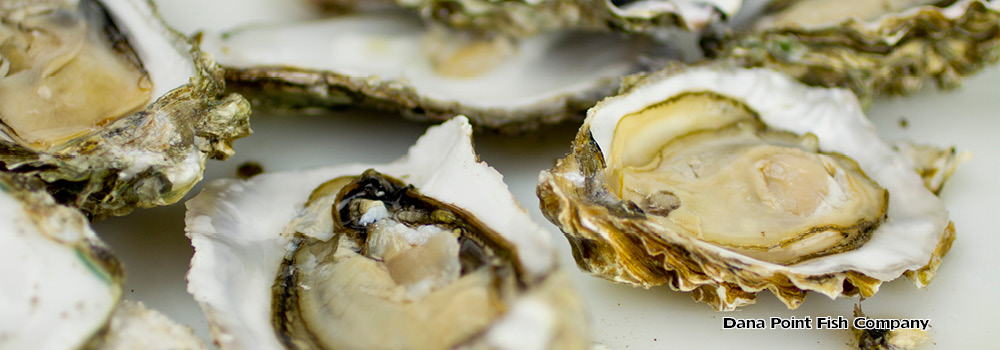 Oyster List – East Coast Varieties