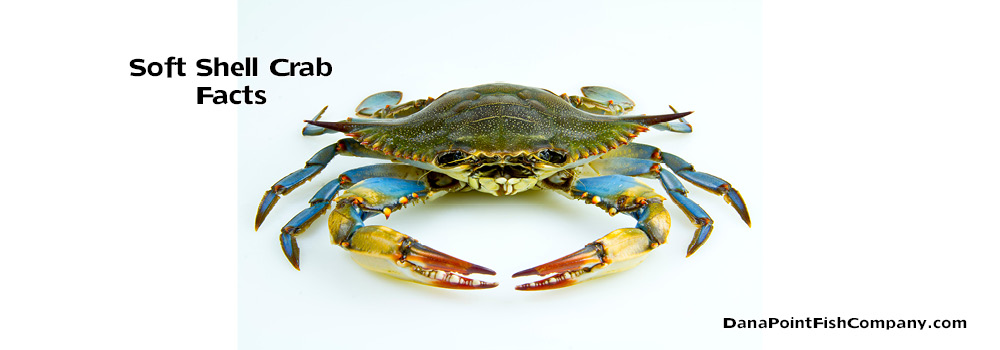 Soft Shell Crab Facts