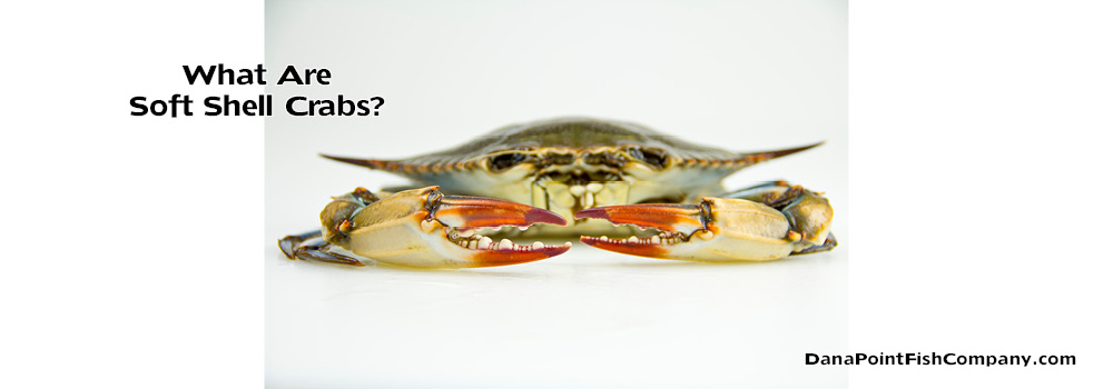 Soft Shell Crabs: What Are They and Why Are Their Shells Soft?