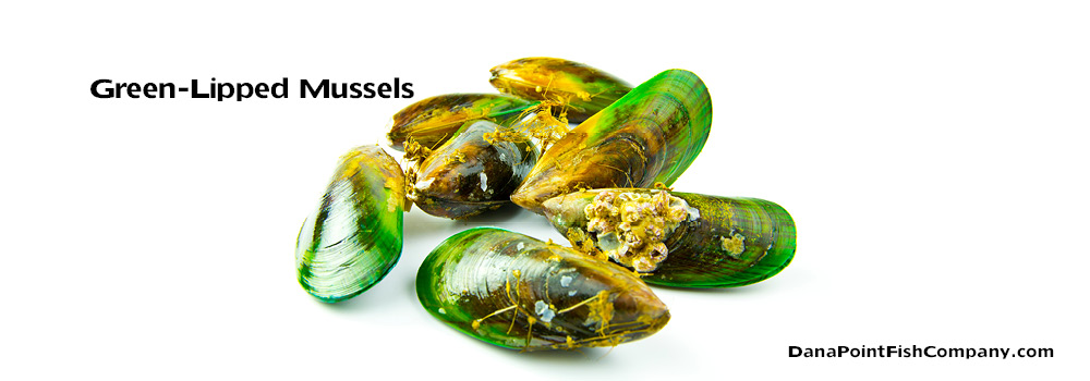 Green-Lipped Mussels – Perna canaliculus