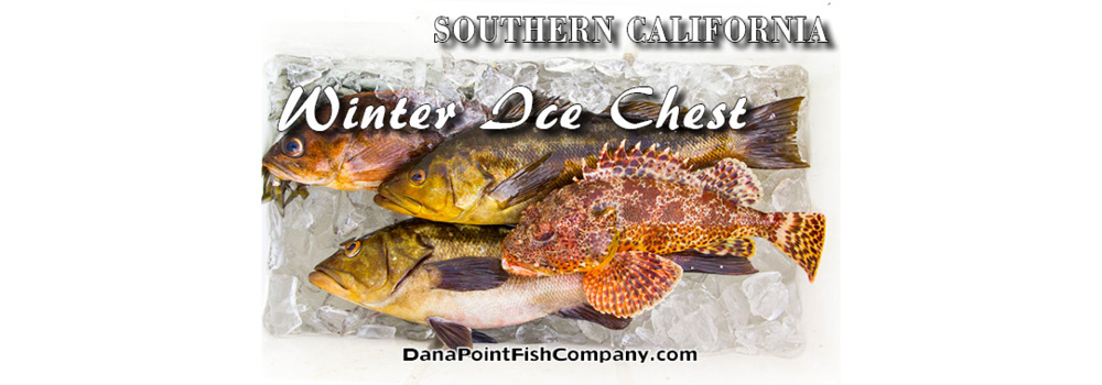 Southern California Winter Ice Chest