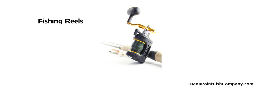 6 Basic Types of Fishing Reels