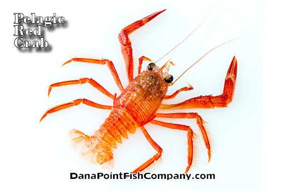 Dana Point Fish Company | Pelagic Rec Crab