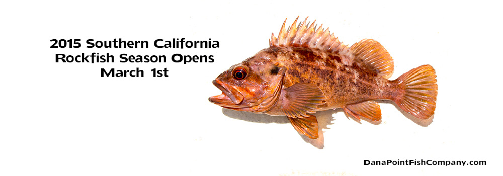 2015 Southern California Rockfish Season Starts March 1st