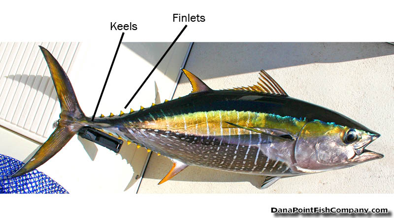 Fish Anatomy | Dana Point Fish Company