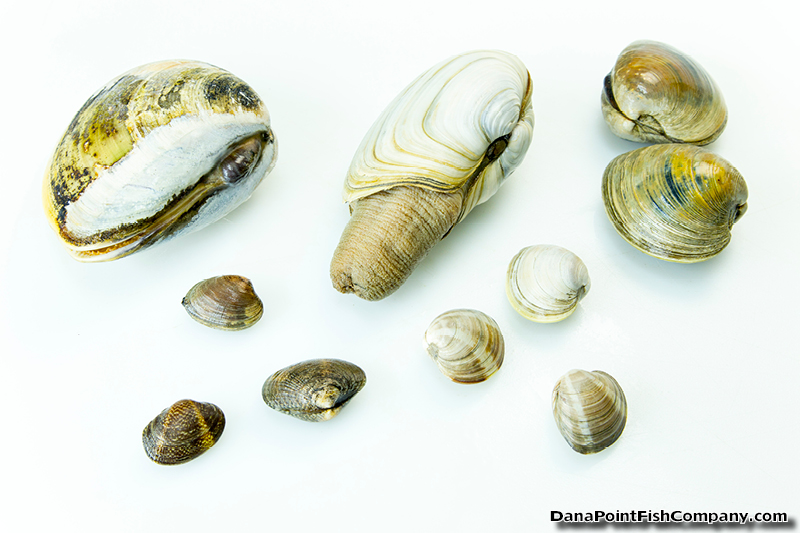 Hard Clams A Cookbooklet English Edition Online Pdf